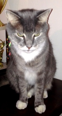 Connecticut Cats Lost And Found Cats Lost W Photos 9