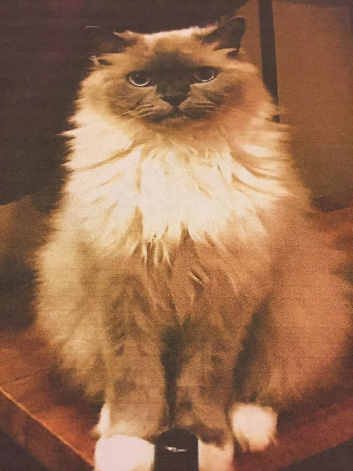 Connecticut Cats Lost And Found Pg Cats Lost Wphotos - 27 cats forgot how to cat